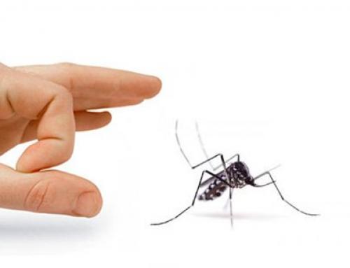 Contro le zanzare: una Soluzione Naturale Efficace