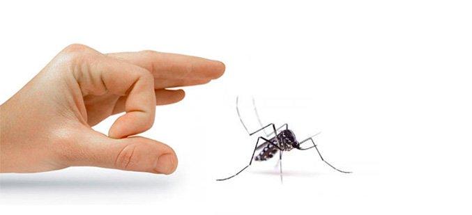 Soluzione contro le Zanzare
